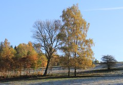(:Linda:) Tags: germany village hoarfrost thuringia birchtree rauhreif bürden