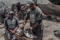 Fishmarket Essaouira Morocco (Sander Pot) Tags: fish fisherman nikon cleaning marocco essaouira d7000