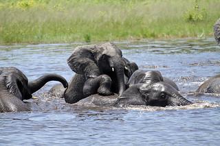 Botswana Okavango Delta Photo Safari 68