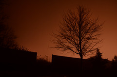 The Tree And The Hill (hpaich) Tags: desktop light wallpaper mist tree silhouette misty fog night dark newjersey gloomy background foggy nj dramatic eerie spooky jersey gloom drama murky desktopwallpaper desktopbackground murk unionbeach