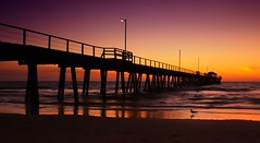 swept up in the sea (Bec .) Tags: ocean sunset water canon reflections seagull obsession x adelaide 1855mm southaustralia actionphoto seac 450d henleybeachjetty rbat75 sweptupinthesea