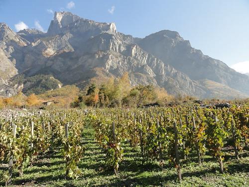 Vignes, St-Julien-Montdenis © D. Dereani, Fondation Facim (5)