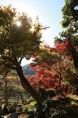 Japan_3240 (ricleosg) Tags: 135mmf2l