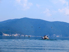 Vogels bij Lake Prespa