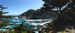 IMG_8482 (Modern Hiker) Tags: ocean california hiking bigsur cyprus coastal carmel sealions pointlobosstatereserve