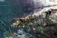 Aquarium de Paris  (20) (Mhln) Tags: paris aquarium requin poisson trocadero poissons meduse 2015 cineaqua