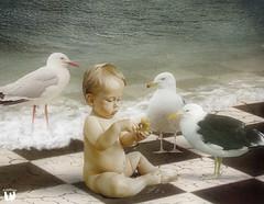 Three's A Crowd ... (rubyblossom.) Tags: boy sea baby water birds child gulls feed crumbs 2015 rubyblossom rubystreasures ghostworkstexturechallenge99