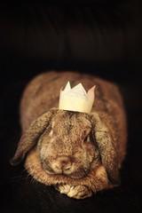the one and only (sommerpfuetze) Tags: rabbit love animal 50mm krone king daniel crown macho haustier liebe tier kaninchen petrait widder kinderliebe knigamschreibtisch