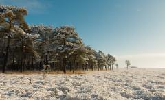 Dwingelderveld (Kees Waterlander) Tags: winter snow sneeuw nederland thenetherlands drenthe dwingeloo dwingelderveld