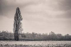 L'arbre (Julien Pf) Tags: white black canon eos rebel noir 1855mm t3 paysage et foret arbre blanc paysages lanscape lightroom lanscapes virage partiel 1100d