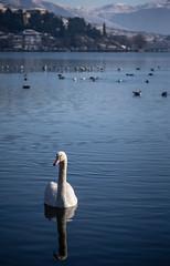Kastoria, Greece (Evan Karageorgos) Tags: lake snow ice birds ducks greece waterscape kastoria