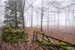 Entrance (jactoll) Tags: trees winter mist misty fog woodland nikon gate foggy cotswolds gloucestershire snowshill d610 jactoll nikonfxshowcase
