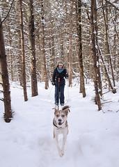 Pull Dog (along4u) Tags: winter dog snow cold skiing xcskiing xcountryskiing alongphoto alongphotography