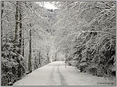 Neuschnee (almresi1) Tags: schnee winter snow river oberstdorf oberallgäu flus stillach
