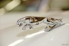 DSC_1691 (Pn Marek - 583.sk) Tags: foto brno jaguar marek autofoto xk xj220 xjrs zraz bvv autosaln galria tuleja fotogalria