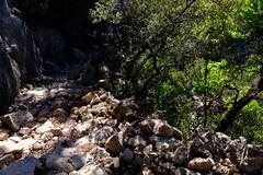 Siurana/ Priorat (5) / Tarragona /  Catalunya (Catalua-Catalonia) (Ull mgic) Tags: naturaleza nature contraluz fuji arboles natura catalonia arbres bosque catalunya catalua tarragona priorat bosc contrallum siurana cam xt1