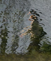 Her Face (trailrunner55) Tags: ireland dublin reflection water face ghost mysterious grandcanal