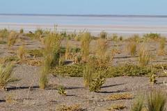 _MG_0750 (Melissa Macgill) Tags: lake outback sa southaustralia eyre