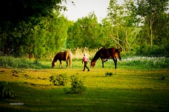 Horse zen (vesterskov) Tags: light sunset portrait horses horse sun macro ex animal set backlight barn training photography photo back spring jump jumping foto dof ride bokeh outdoor walk daniel sony slide full riding stop sp f frame di western flare if 28 mm af fullframe dslr tamron stable 70200 f28 trot ld slt dg trning hest fotografi 70200mm horsemanship portrt heste a001 hsm a99 stald vesterskov slta99v slta99 a99v