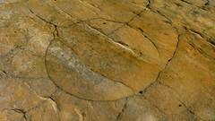 Circle (Dru!) Tags: usa circle utah ut sandstone desert crack circular calfcreek utahtrip