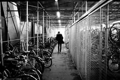 bikes and neon (gato-gato-gato) Tags: street leica bw white black classic film blanco monochrome analog person schweiz switzerland flickr noir suisse strasse zurich negro streetphotography pedestrian rangefinder human streetphoto manual monochrom zrich svizzera weiss zuerich blanc ilford m6 manualfocus analogphotography schwarz ch wetzlar onthestreets passant mensch sviss leicam6 zwitserland isvire zurigo filmphotography streetphotographer homedeveloped fussgnger manualmode zueri strase filmisnotdead streetpic messsucher manuellerfokus gatogatogato fusgnger leicasummiluxm35mmf14 gatogatogatoch wwwgatogatogatoch streettogs believeinfilm tobiasgaulkech