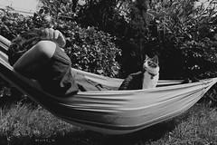 Sguardo d'amore (zuiko94) Tags: nikkor nikon nikontop nikkorlens nikond3200 nikonphotography nikonian nikonpic nikonitalia nikonlove nature nikonitaly nikonofficial nikoneurope nikonature natura mynikon photography portrait cat catporn catportrait eyes gaze father love lovephotography