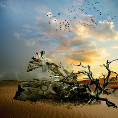 Elisa in the desert (jaci XIII) Tags: woman tree bird person sand pessoa desert areia mulher pssaro trunk tronco rvore deserto