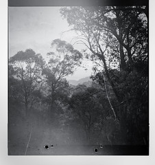 When Film Goes Bad (Shooting Ben) Tags: trees blackandwhite mist mountains film nature mediumformat landscape bright australia scratches victoria holes 120film lightleak mistake distance yashica yashicamat caffenol fogging caffenolc