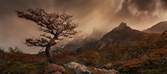 Patagonian Light (beaugraph) Tags: autumn light patagonia mist mountains argentina landscape lonetree