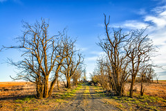 Perdition (KPortin) Tags: road trees abandoned dead adamscounty deadtrees
