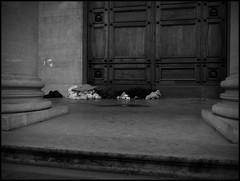 Gent (B) - Volderstraat - 2016/02/24 (Geert Haelterman) Tags: blackandwhite white black monochrome belgium candid streetphotography olympus zwart wit ghent gent gand geert streetshot photoderue straatfotografie photographiederue fotografadecalle strassenfotografie fotografiadistrada haelterman omdem10