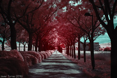 Afternoon walk (The Whisperer of the Shadows) Tags: longexposure trees geotagged arboles camino path infrared asphalt asfalto ciudadreal lamancha r72 infrarrojo hoyar72 largaexposicion vaverde landscapesfromlamancha