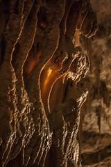 Postojna Caves - Grotte di Postumia Slovenia (eastwood_clint) Tags: slovenia cave stalagmite grotte postojna postumia stalattite