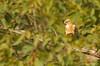 Long-legged Buzzard / Buteo rufinus (ganglionn) Tags: life wild green bird art nature look field animal animals fauna canon turkey landscape eos photo eyes long looking image photos bokeh outdoor hawk türkiye picture aves photographic turquie türkei raptor serene usm buzzard f56 dslr turkije animalia legged profil trabzon turquía turchia 400mm トルコ turkki buteo turkiet chordata 600d turecko şahin toruko turcia kızıl yomra kissableka colorphotoaward τουρκία rufinus thebestofday gününeniyisi tуpция teoki blinkagain