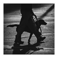 Pets (eduardo.mazzeo) Tags: pets bw shadow monochome monocromo street