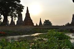_DSC0336 (lnewman333) Tags: sunset sea river thailand temple seasia southeastasia buddhist unescoworldheritagesite ayuthaya ayutthaya chaophrayariver waterhyacinth 1460 watchaiwatthanaram kingprasatthong