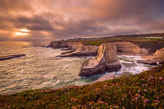 Edge of the Pacific.. (Simon Huynh) Tags: sunset santacruz rock clouds cloudy pacificocean bluehour wildflower sharkfincove