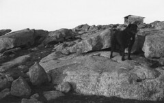 The Lookout (robinguymer) Tags: film blackwhite canona1 caffenol bwfp