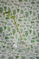 Bambus in Dekanter vor Farn, 2016 (Lexi Blue) Tags: stilllife fern green objects stilleben bamboo colored grn stillife arrangement farn bunt decanter abstrakt arranged bambus gestaltung gestaltet dekanter angeordnet objektfotografie arrangiert arrangedobjects canon6dmark3