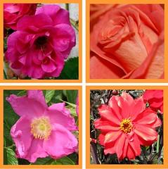 Ich drst nach dir, Herr Jesu Christ (amras_de) Tags: flower fleur flor blomma blume fiore blte blomst virg lore bloem blm iek floro kwiat flos ciuri kvet kukka cvijet flouer blth cvet zieds is floare blome iedas