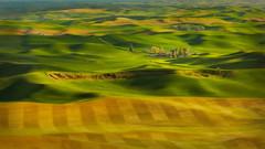 Winter Wheat (Malcolm Carlaw) Tags: washington wheat farming agriculture localcolor palouse