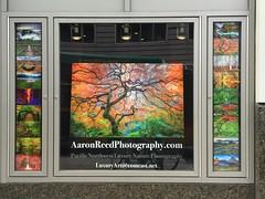 Pacific Place Mall Display Seattle, Washington (~ Aaron Reed ~) Tags: seattle washington 7th 6th oliveway pacificplacemall aaronreedphotography aaronreedprints lumachrome aaronreedlumachrome