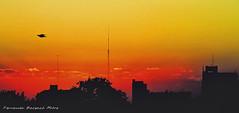 pajaro subito (ojoadicto) Tags: sunset atardecer contraluz city ciudad pajaro digitalmanipulation artisticphotography