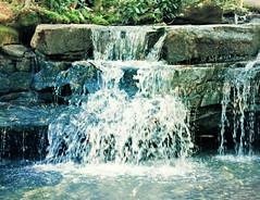 Swallow Falls SP ~ Tolliver Falls - HSS! (karma (Karen)) Tags: swallowfallssp garrettco maryland mdstateparks creeks waterfalls tolliverfalls picmonkey crossprocess watertexture hss sliderssunday 4summer