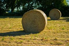 Strohballen (JBsLightAndShadow) Tags: summer field sunshine nikon sommer feld felder straw sunny fields heidelberg bale sonnig stroh strawbale sonnenschein ballen strohballen baleofstraw nikond3300 d3300