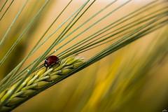 working (yasar metin) Tags: working life light nature doa ladybug national photographer photography photo photographers canon canon70d 70d evren eos hayat hayal