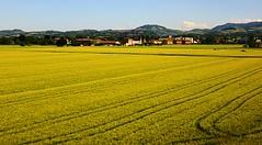 Fields of gold (Gert Vanhaecht) Tags: light italy color colour nature yellow architecture canon buildings landscape gold availablelight bologna impressionism canonpowershotsx700hs gertvanhaecht