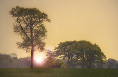 Trees At Sunset (Osgoldcross Photography) Tags: landscape trees horizon sun sunset light evening grass grasses sky moody spring nikon nikond810 raw