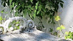 Sometimes the oldest is the most charming. Like this bench, so old, so nice. (wingerjohanne) Tags: plant bench