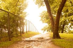 (Mikko Luntiala) Tags: trees light summer green june fence suomi finland helsinki bright path roots bark overexposure aita kaarna kes valo 2016 d600 keskuu puut polku vihre nikond600 juuret ylivalotus valoisa afsnikkor2470mmf28ged mikkoluntiala
